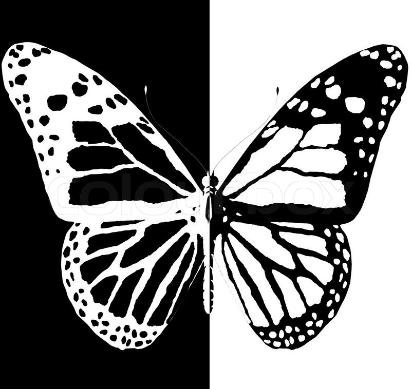 3366693-silhouette-of-butterfly-on-a-black-and-white-background